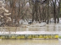 Logroño inundado-10