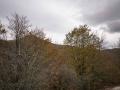 Selva de Irati_16