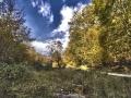Selva de Irati_25