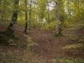 Selva de Irati_29