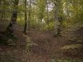 Selva de Irati_30